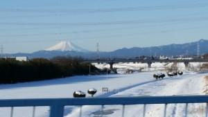 雪の河川敷の向こうに真っ白な富士山